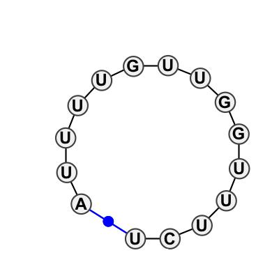 HL_63304.1