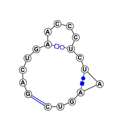 HL_05350.1